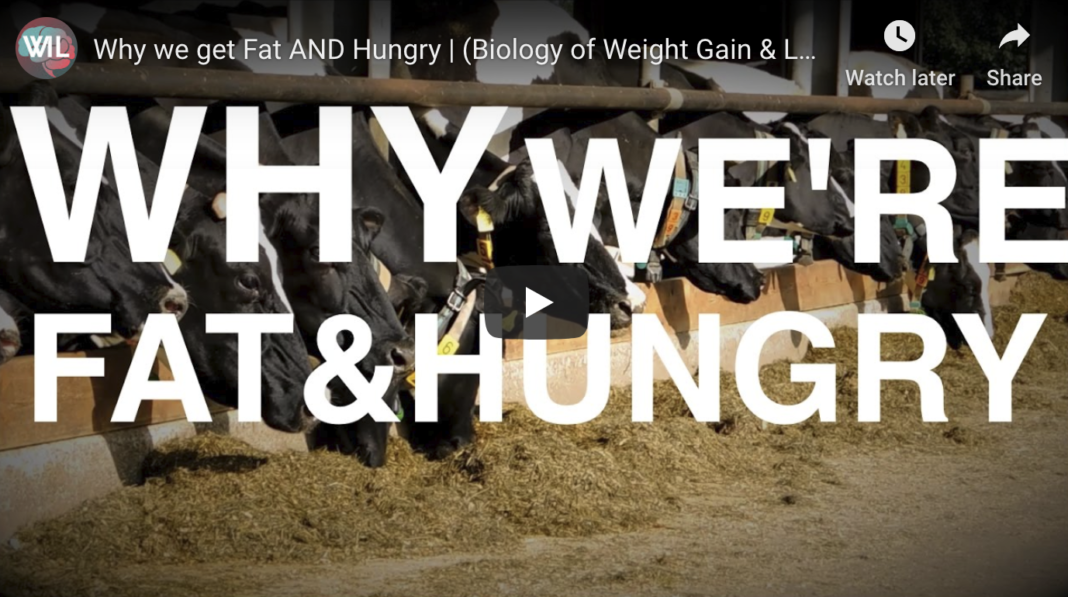 Why we get Fat AND Hungry