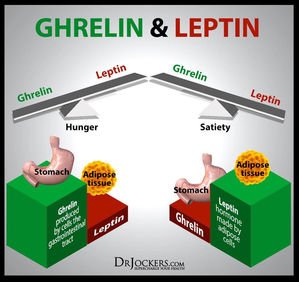 รูปที่ 3 : infographic ที่ทำให้เราเห็นว่าในช่วงหิว และอิ่ม ฮอร์โมนจากกระเพาะอาหาร และเนื้อเยื่อไขมัน ฮอร์โมนใดมีอิทธิพลมากกว่ากัน