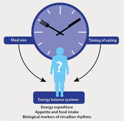 รูปที่ 5 : การกระจายแคลอรี่ในแต่ละมื้อที่แตกต่างกัน ระหว่างเช้ากับเย็น มีความสำคัญกับการทำงานให้สอดคล้องกับนาฬิกาชีวภาพ