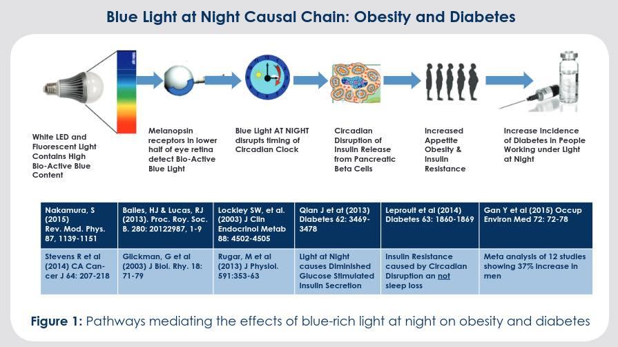 แสงสีฟ้า เพิ่มความเสี่ยงของโรคอ้วนและเบาหวาน