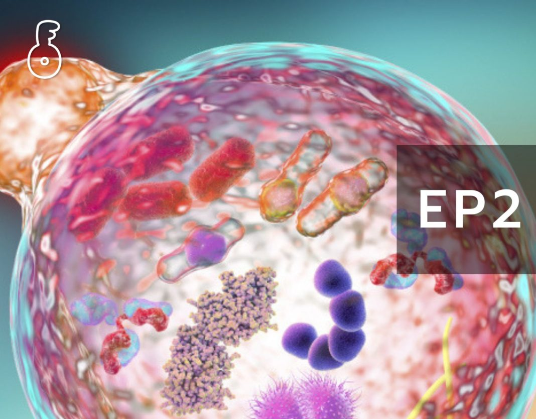 ขบวนการ Autophagy : ความเข้าใจโดยรวมและการประยุกต์ใช้ ส่งเสริมขบวนการเก็บกวาดทำความสะอาดภายในเซลล์ เพื่อความมีสุขภาพที่ดี (ตอนที่ 2)