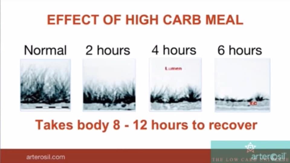 รูปที่ 5 : ผลกระทบของอาหารที่มีคาร์โบไฮเดรตสูง ต่อความเสียหายของชั้นขน Glycocalyx และต้องใช้เวลา 8-12 ชั่วโมงกว่าจะฟื้นตัว