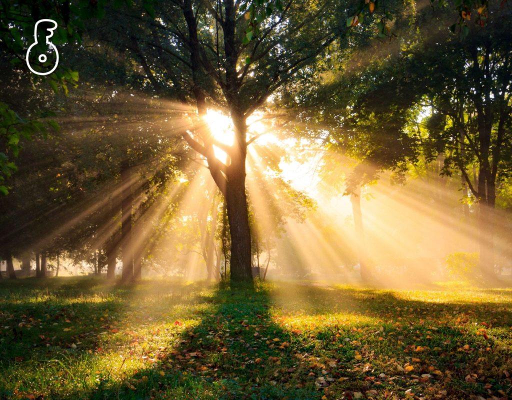 การได้รับแสงแดด ในปริมาณที่เหมาะสมทุกวัน (Sensible Sun Exposure)
