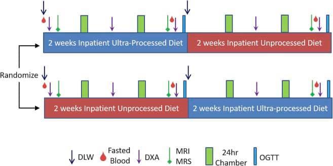 รูปที่ 2 : ลักษณะของงานวิจัยตลอด 4 สัปดาห์ ของทั้ง 2 กลุ่มประเภทอาหาร