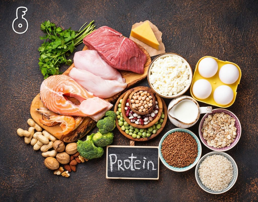 protein and fat