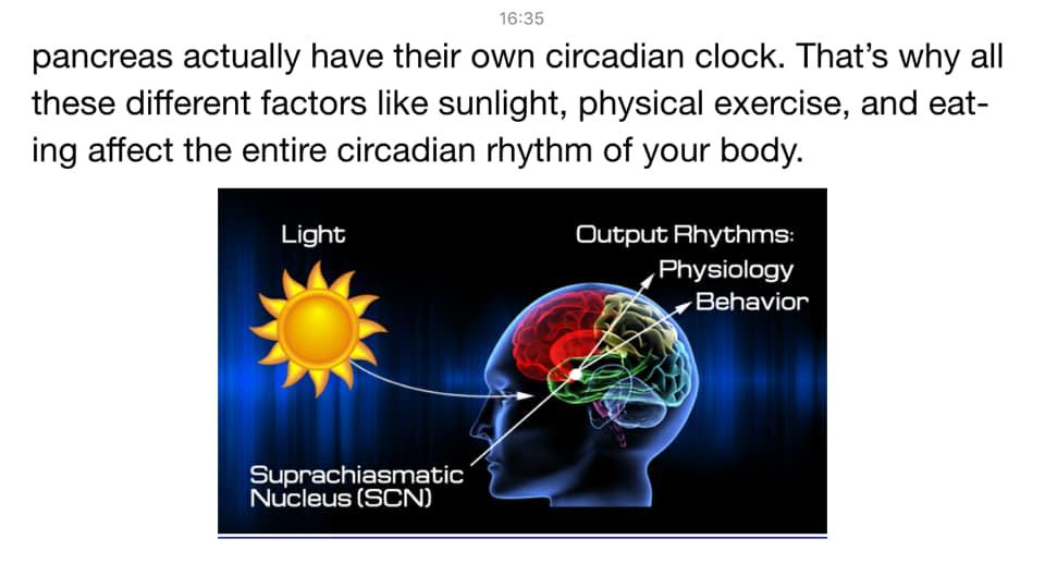 รูปที่ 3 : แสงสว่าง เมื่อผ่านรูม่านตา ส่งสัญญาณกระตุ้นสมอง (Suprachiamastic Nucleus) กำกับขบวนการทางสรีรวิทยาของร่างกาย เครดิตรูปภาพ : หนังสือ Metabolic Autophagy ของ Siim Land