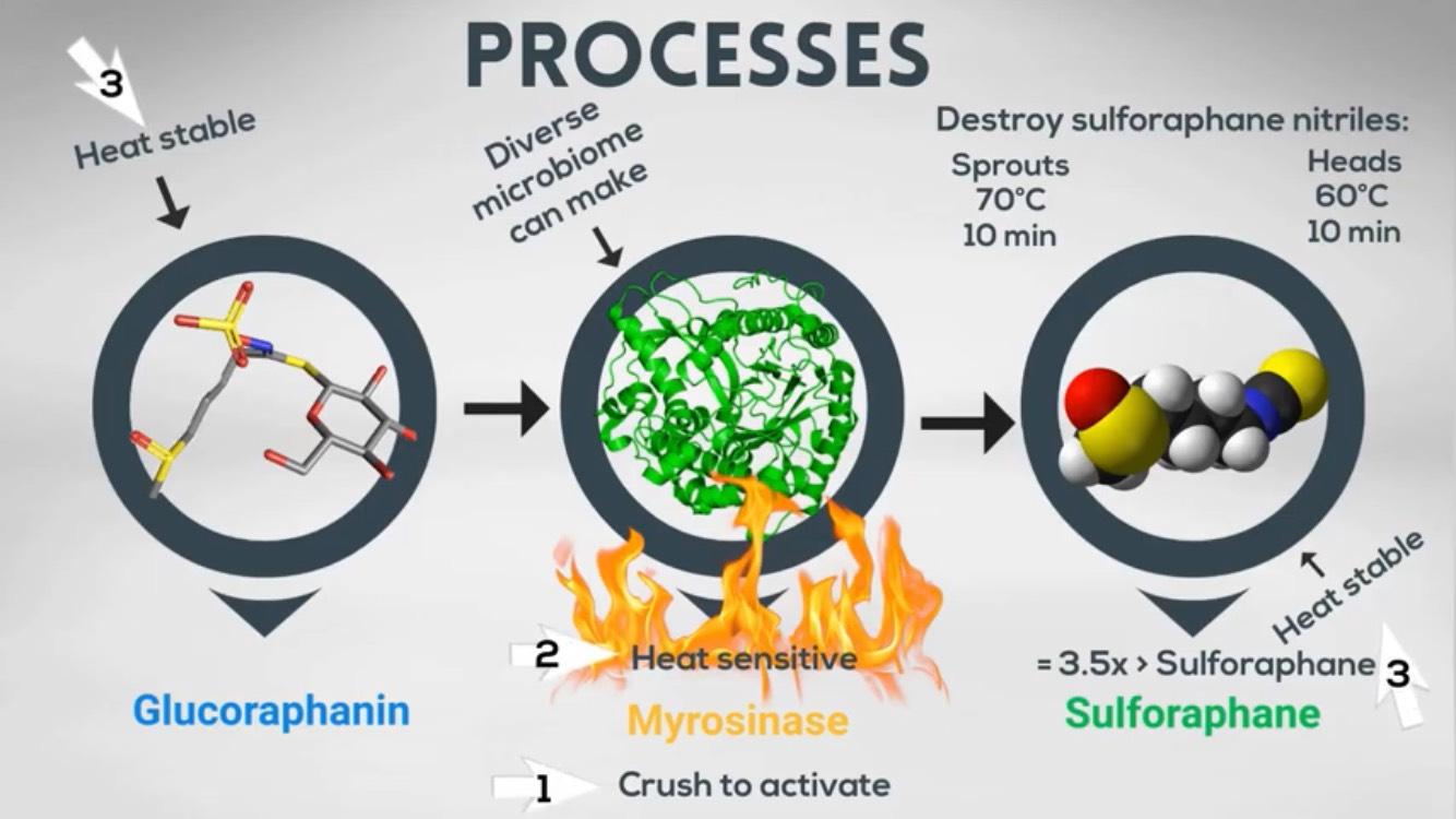 3 หลักการสำคัญ ในการสร้างและรักษา Sulforaphane