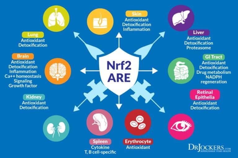 รูปที่ 3 : วิถี Keap1-Nrf2-ARE ที่ส่งผลต่อความมีสุขภาพดีของอวัยวะต่างๆในร่างกาย